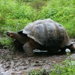 Los animales de las Islas Galápagos