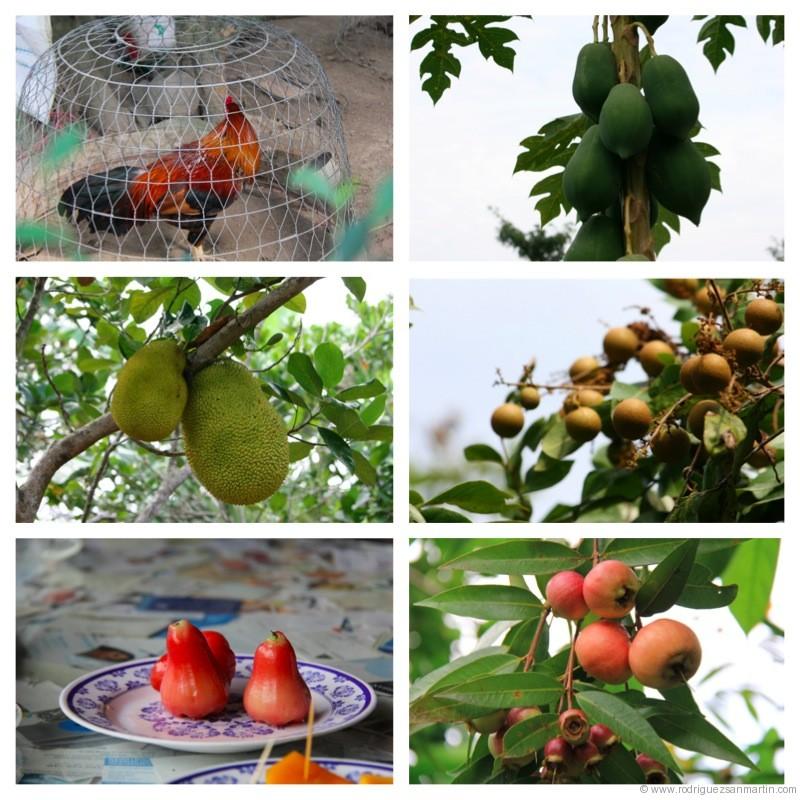 gallo y frutas