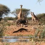 Primeros días en Namibia: Erindi y Damaraland